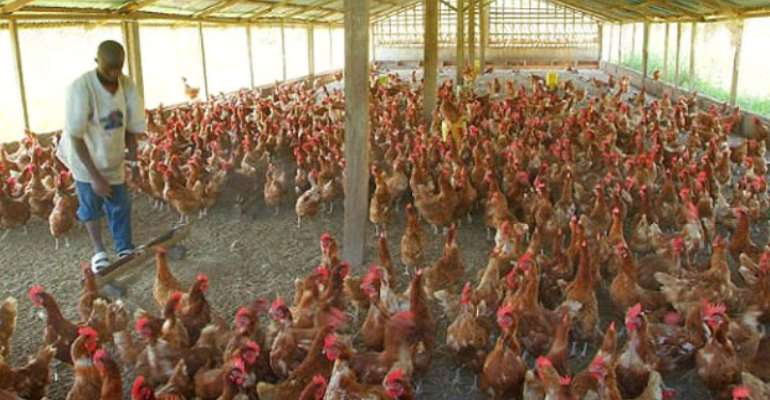 SOS From Poultry Farmers