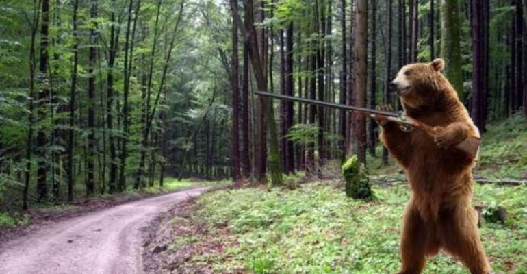 Brown Bear On The Loose In Siberia