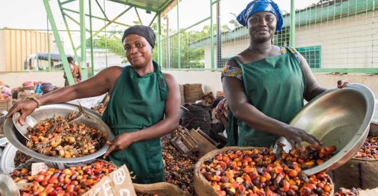 Palm fruit production in Ghana, photo: courtesy of Rapunzel
