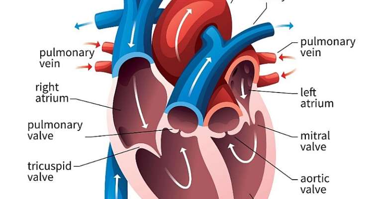 New Year Resolution and Naturopathic approach to Cardio Health