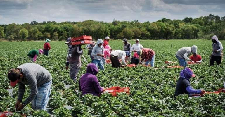 IITA Unveils Digital Tools For Agricultural Transformation