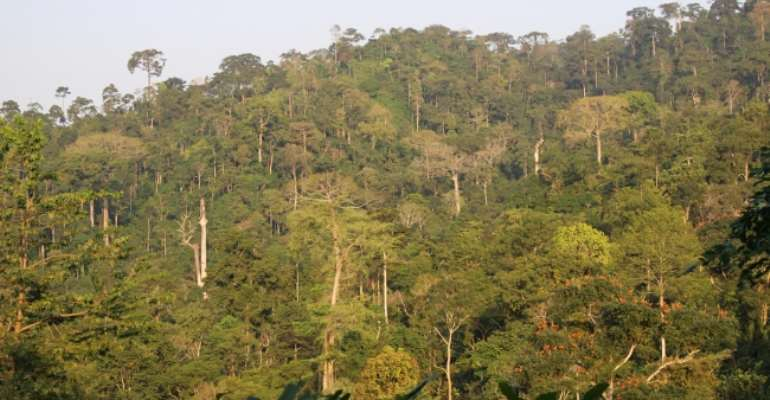 Stop Mining Atewa Forest — A Rocha Ghana Sues Gov't