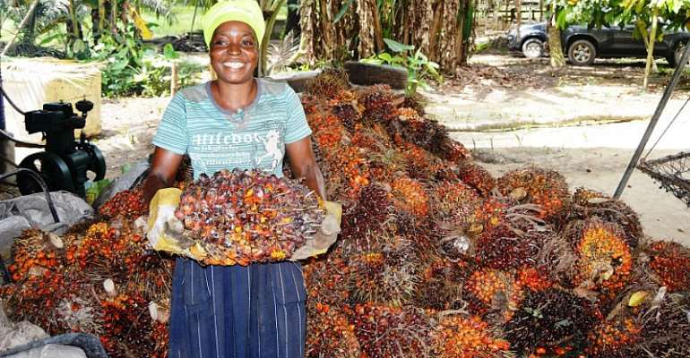 Solidaridad Launches Climate-Smart Program To Improve Oil Palm Production