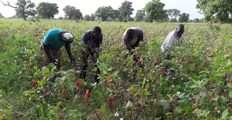 Alliance For Science Ghana Takes On Agric Minister Over GMO Comments