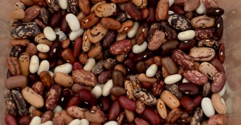 Common Bean: The Industrial And Nutritional Solution