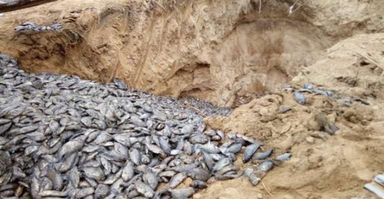 Ministry Of Fisheries Undertakes Immunisation Of Tilapia Farms