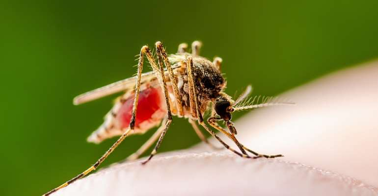 Mosquito eggs can remain viable for years even in dry conditions and hatch after heavy persistent rains.   - Source: Shutterstock