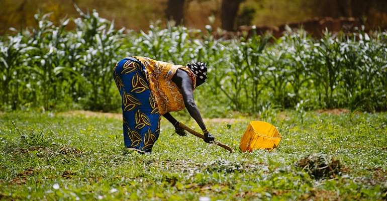Bam, a province Burkina Faso, was once a migration source due to land degradation. This is changing thanks to soil and water conservation projects.  - Source: flickr/ Ollivier Girard/ CIFOR