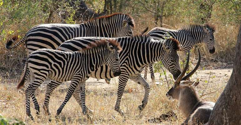 Majete Wildlife Reserve, Malawi.  - Source: Jason I. Ransom