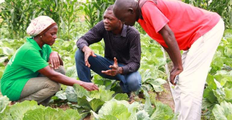Dr. Kwamina Banson, middle, explains a point to two farmers working at the demonstration fields, photo credit: Australia Awards
