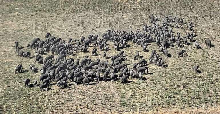 Elephant herd sighted in Nigeria's Boko Haram warzone