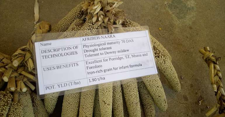 U/E/R: The untapped potentials of the Ghanaian pearl millet