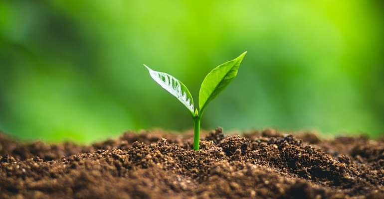 Food and clean water start with soil biodiversity ...