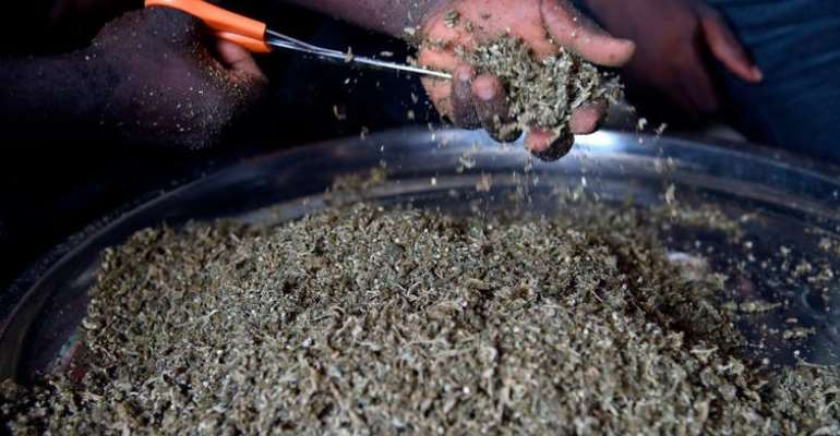 A vendor cuts cannabis popularly known as marijuana for sale in Nigeria.  - Source: Pius Utomi Ekpei/AFP/Getty Images