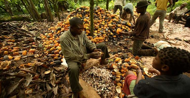 A Liberian cocoa grower whose free enterprise market rights are to be usurped by Lebanese and Arab