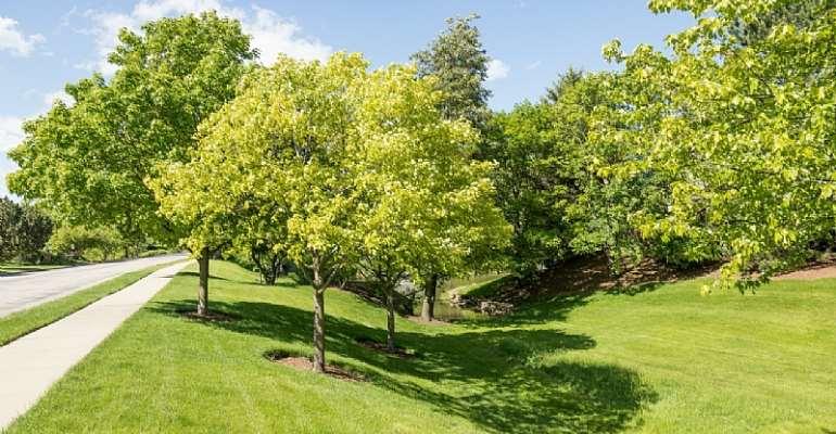 Trees for the Future reaches 200 Million Tree mark