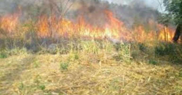 Bushfire cases increase in Central Region