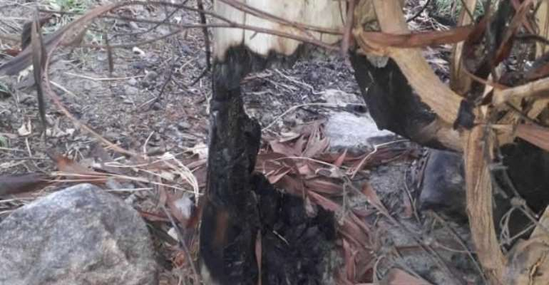 Bushfire Burns 29 ECG Poles At Sogakope