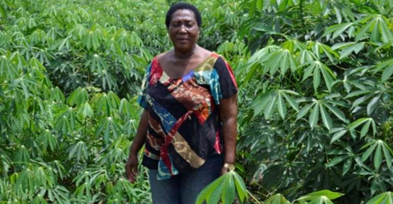 Mrs. Janet Gyimah-Kessie In Her Cassava Farm