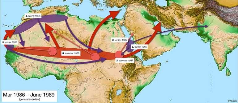 End Threat of Locust Plague: Transform the Desert