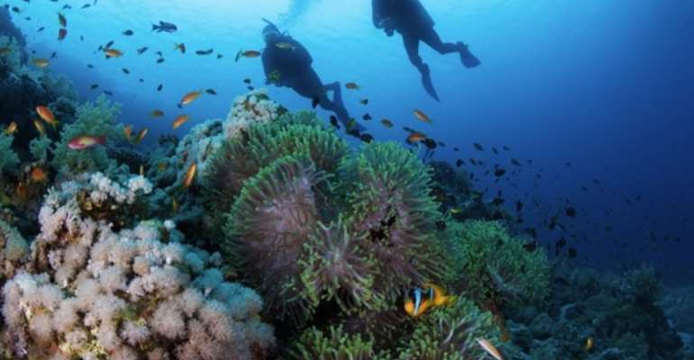 Two Incredible Diving Spots for Superyacht Charterers