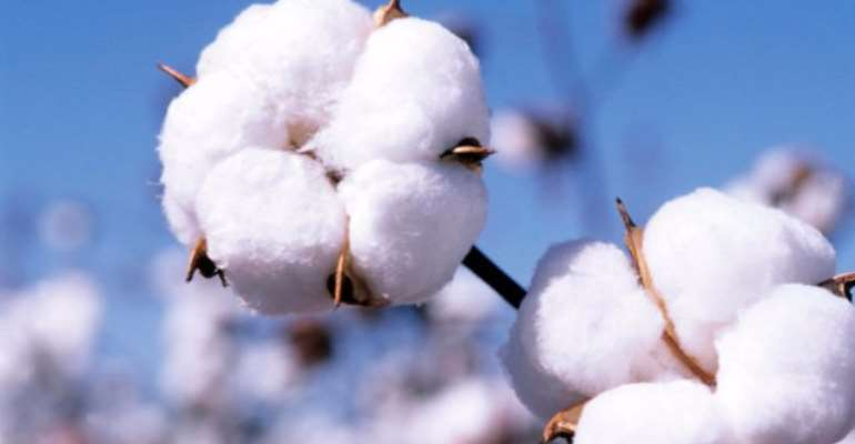 GMO Cotton Problems Won't Recur In Africa