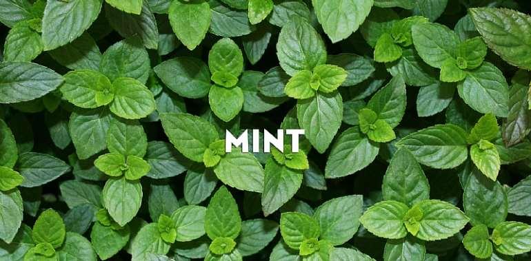 Mint Leaves(Nunum)