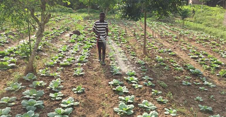 Here's How The Youth Can Turn Ghana's Fortune Through Agriculture