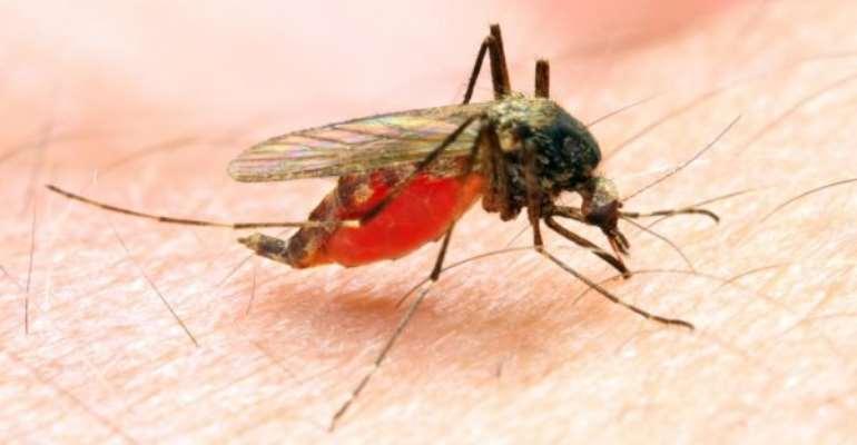 Malaria: the ordeal of Vicente Azumah