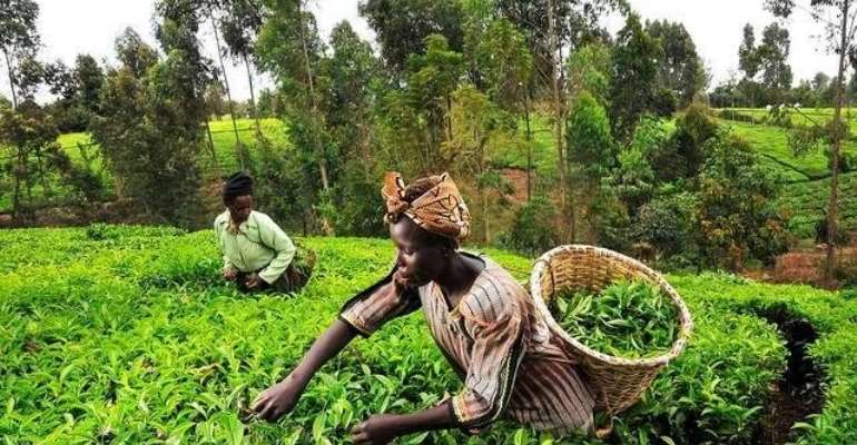 Barclays, GCX To Boost Farmers, Traders On Local Bourse