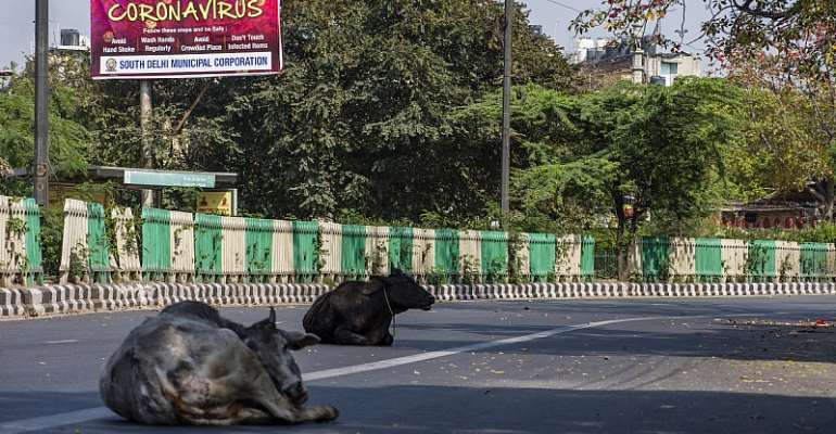 Stray cows rest on a New Delhi street during a one-day civil curfew to combat coronavirus. Cattle may have been central to a coronavirus outbreak in 1890. - Source: Yawar Nazir/Getty Images