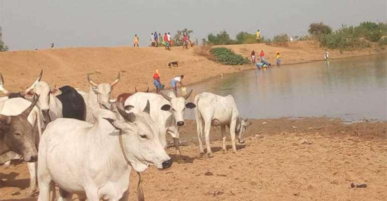 Three SHSs Share Dam Water With Animals