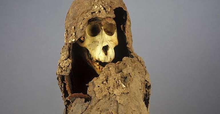 A photograph of a baboon mummy from the Lyon collection.  - Source: Number MHNL 90001206, © Département du Rhône, Patrick Ageneau