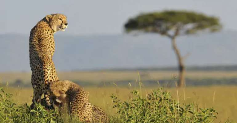 Kenya celebrates the first 100 years of Cottar's, a pioneer in African safari tourism
