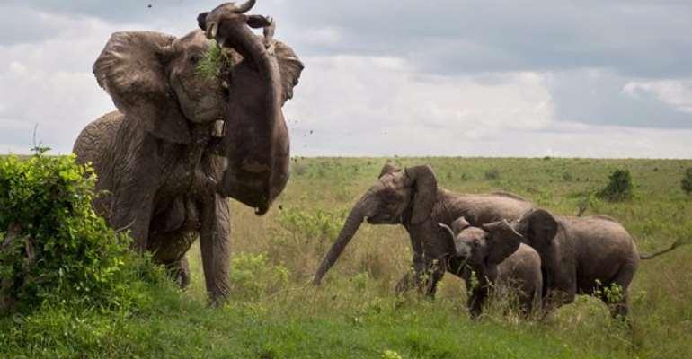 "Zimbabwean Hunter Who Killed Over 5,000 Elephants Declares Himself ""Totally Unrepentant"""