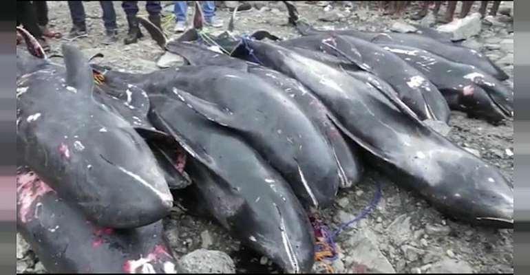 Washed ashore fish: Hawa Koomson's stress claim true — UG Marine Science Department