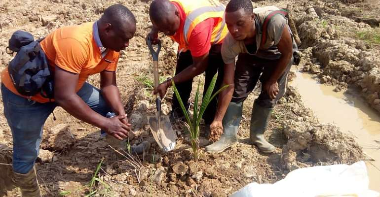 NGO Begins Coconut Plantation On Minti Galamsey Sites