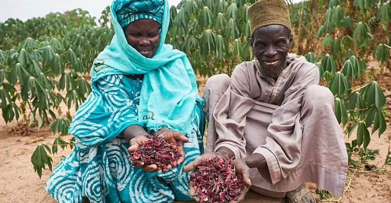 How Smallholder Farmers In The Developing World Are Making It Through COVID-19