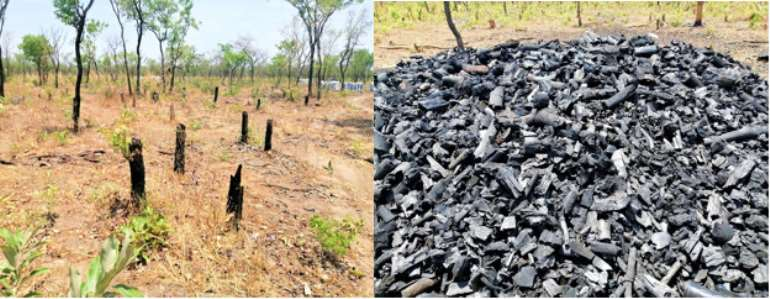The Continued Deforestation in Northern Ghana: A call for Action from Leadership