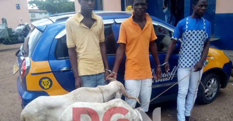 Three friends arrested for stealing sheep