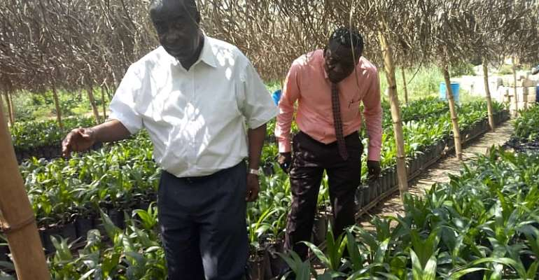 Birim Central To Supply 50,000 Oil Palm Seedlings To Farmers