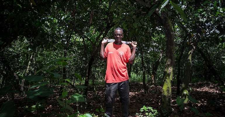 Ghana's forests require better care if cocoa farming is to be sustainable. - Source: Wikimedia Commons