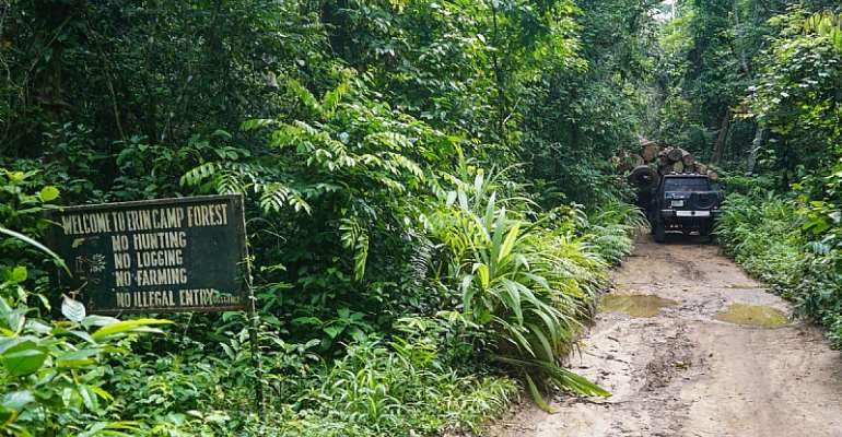 Omo Forest, a home for elephants, in Ijebu East and North Local Government Areas, Ogun State, Nigeria  - Source: