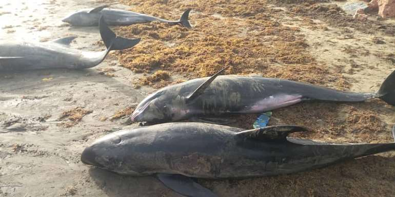 Media reports on dead fish and other aquatic mammals washed ashore in Accra and Axim-Bewire worrying