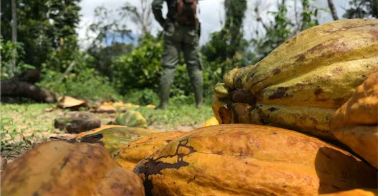 Clarify Position On Cocoa-Driven Deforestation—COCOBOD Boss Told