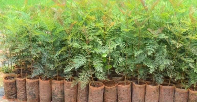 Trees nursing plantation