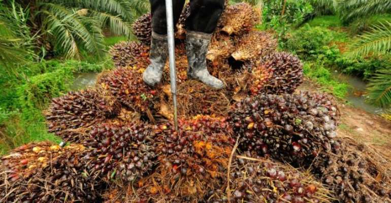 Ghana Loses US$40m To Oil Palm Smuggling Annually