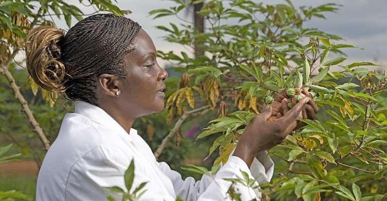 Jane Nabawanuka, Research Officer Kwanda Agricultural Research Institute, Kampala, Uganda