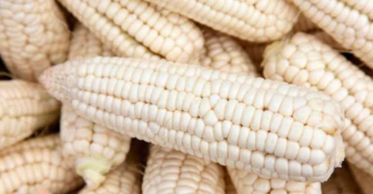 130 Metric Tonnes Of Maize Set To Trade On Ghana Commodity Exchange