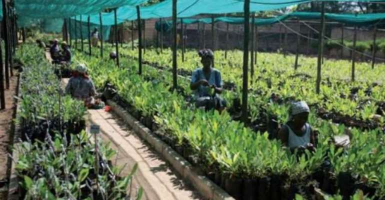 Does A New Export-Based Green-Agro-Industrial Opportunity With A Super-Lucrative Value-Chain Await Ghanaian Entrepreneurs?